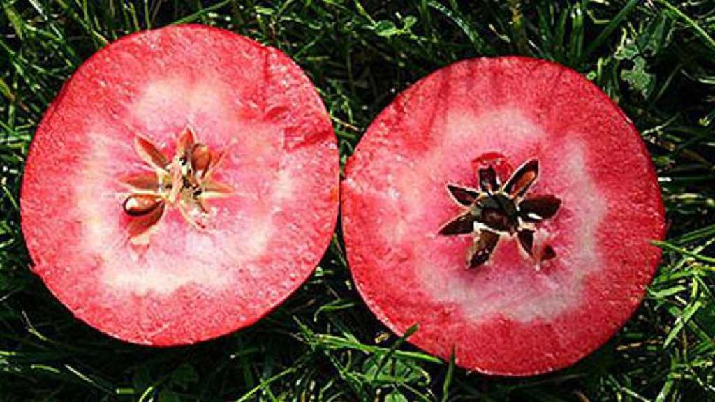 Llegarán en dos años manzanas de pulpa roja