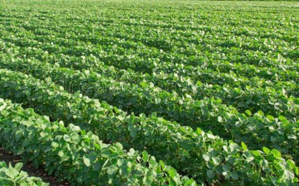 Optimizan la producción de soja con herramientas digitales