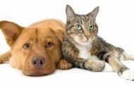 Castraciones ilegales: riesgo para la salud pública y maltrato animal