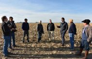 Creció un 18,8% la superficie sembrada de trigo en la Provincia