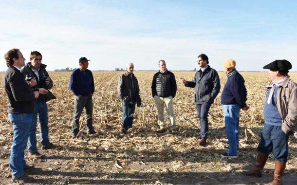 Creció un 8% la superficie sembrada de cebada en la Provincia