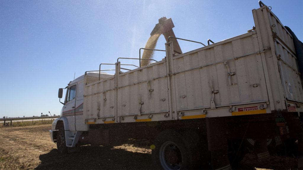 Promulgan ley que prohíbe fumigar granos durante la carga y transporte