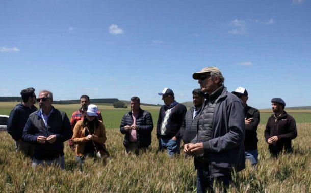 Molineros brasileños visitaron la provincia interesados en el trigo