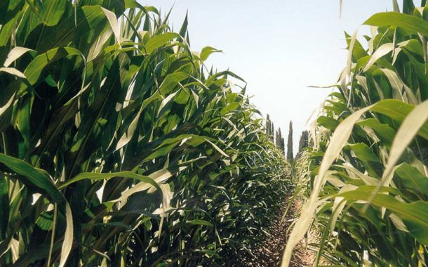 Creció la superficie sembrada de los cultivos de gruesa en la Provincia