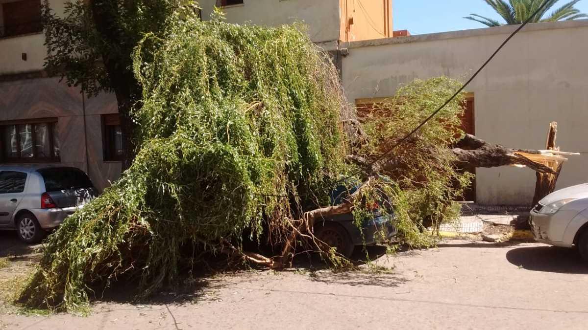 Árbol cayó sobre un automóvil que estaba estacionado en la vía pública