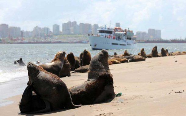 Buena ocupación pero pocas compras, el saldo de la Semana Santa en Mar del Plata
