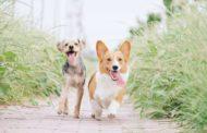 Argentina tiene la mayor cantidad de perros como mascotas del mundo