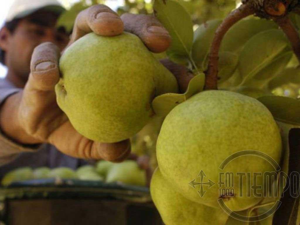 Progresan en bioinsecticidas para combatir la plaga principal de peras y manzanas