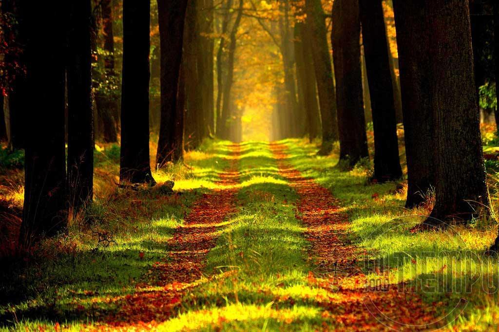 Árboles, viviendas de madera y aceites esenciales