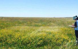 La fertilización disminuiría la capacidad de los pastizales pampeanos de resistir inundaciones