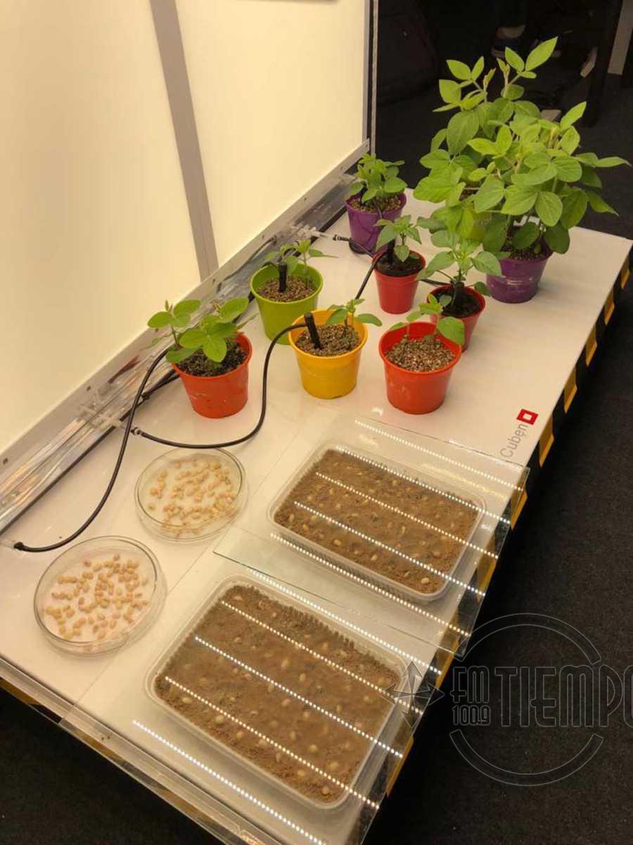 Diseñan un módulo climático para el crecimiento de plantas en condiciones controladas