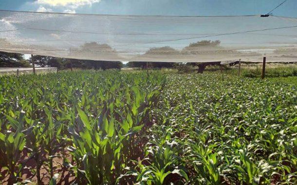 Se abre el abanico de cultivos para el centro árido de la Argentina
