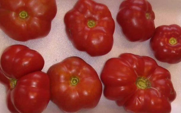 12 tomates recuperados lideran el ranking de los más sabrosos