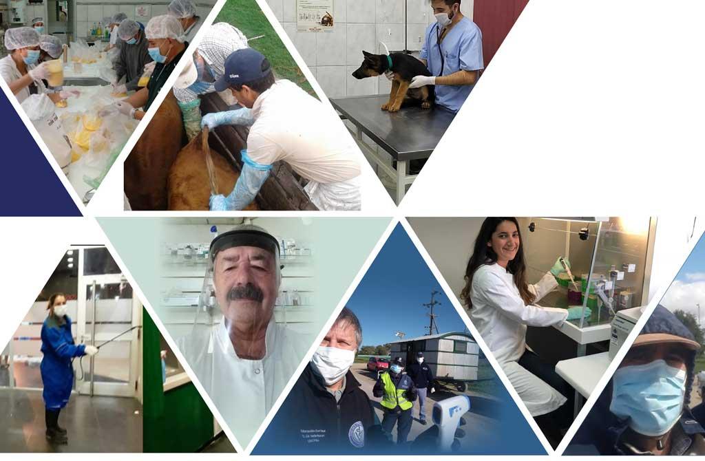 En este contexto, el rol de los veterinarios es cada vez más importante