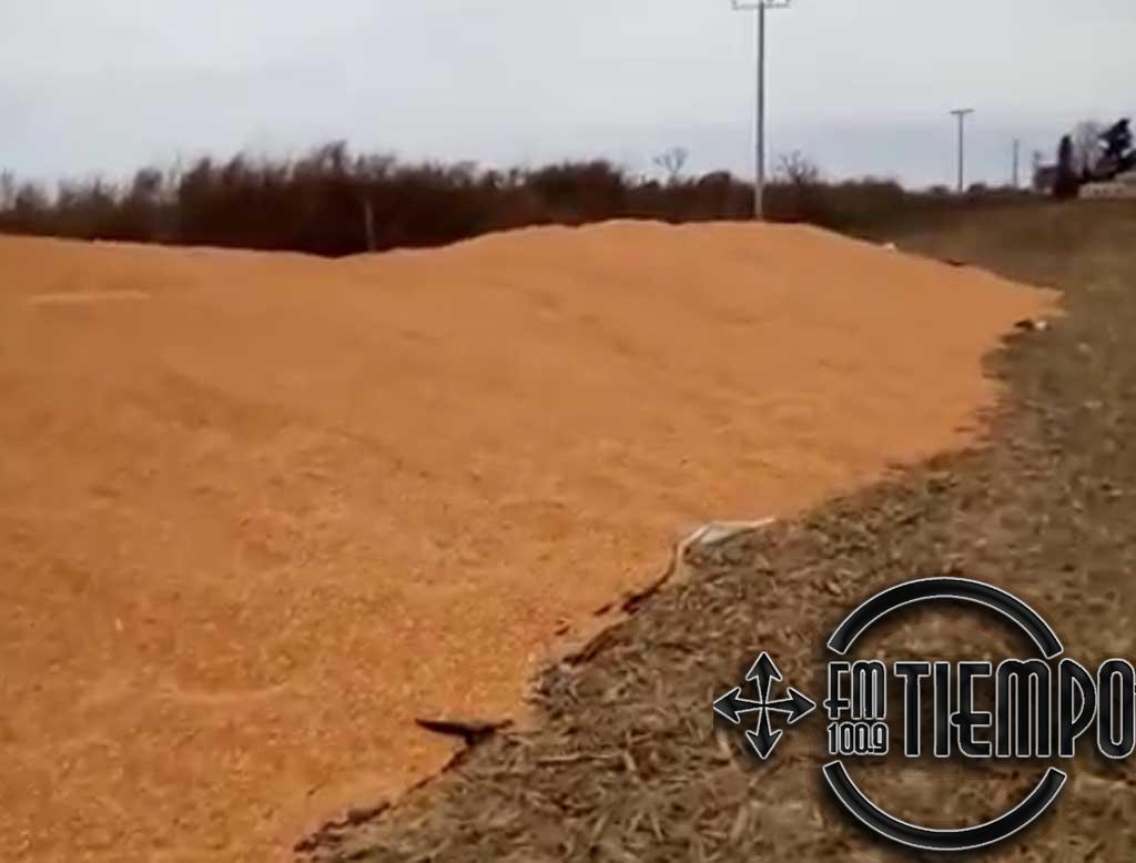 Denuncian la rotura de silo bolsa en la zona de Santa Felisa