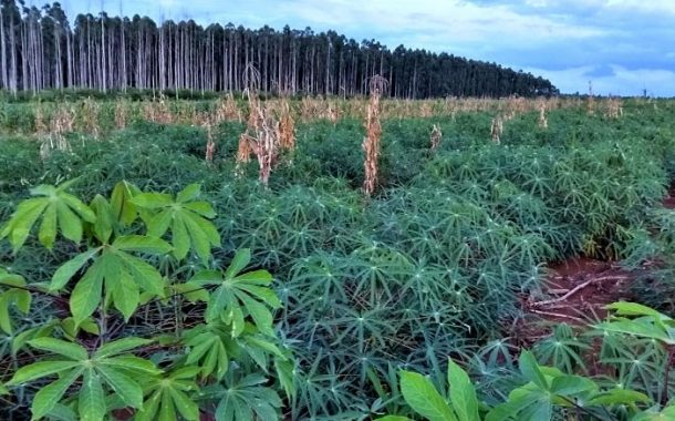 Cambian monocultivo de pinos por producción agroecológica de alimentos