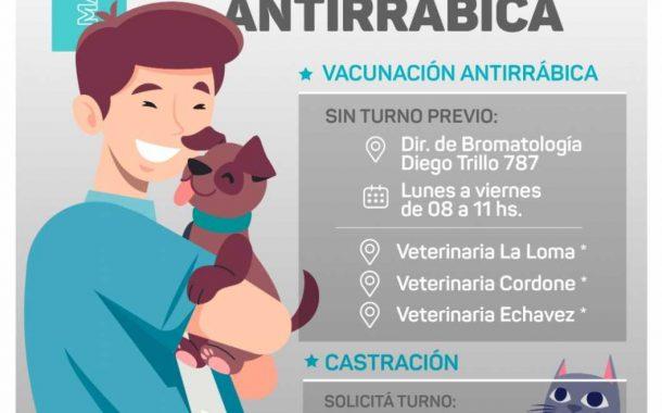 Servicio de castración y vacunación antirrábica para mascotas