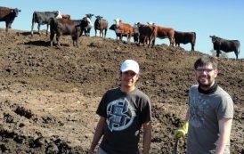 Los feedlots de la Pampa Húmeda podrían dejar de contaminar las aguas