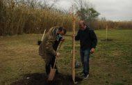 Plantaron árboles en el paseo de la ribera